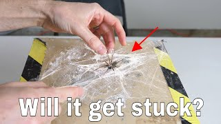 Can a Spider Get Stuck in its Own Web? Wrapping a Spider in Spiderweb Experiment