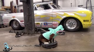 "Cat Dressed as Shark Cleans the Garage on a #Roomba! #SharkCat is #SharkWeek I Cartoon – ""On & On"""
