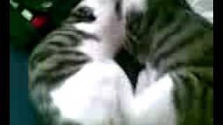 Gay Cat Porn :D