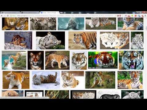Как скачать картинку в интернете