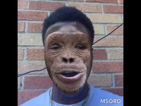 Hispanic Monkey
