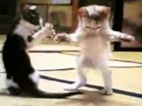 Kedilerin Oyunları