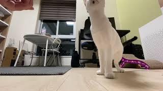고양이훈련. 앉아만 할…