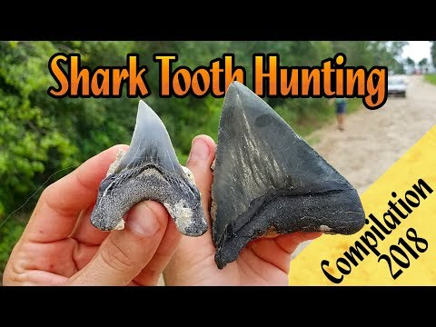 Shark Tooth Hunting In Florida | Summer Of 2018 Compilation | Megalodon Teeth & Fossil Great Whites