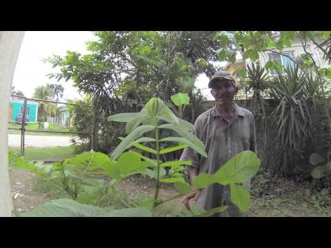 Loving Belize Episode 12 - Tourist Advice, Whirlwind tour of Belize