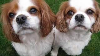 Uk Rescue Animals In Need Of Adoption - Nov 15 2011 - Animalsneedinghomes.co.uk