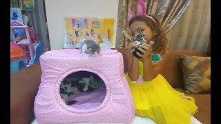 Kedicik Alinaya yeni pembiş ev, sonunda kavuştuk, eğlenceli çocuk videosu