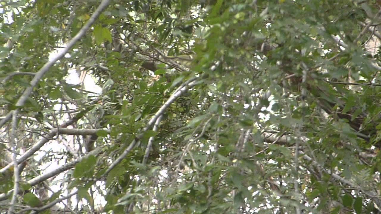 nature in my backyard episode 61 hd youtube