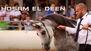 Hosam El Deen - الفحل الفلسطيني حسام الدين thumbnail