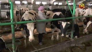 В Татарстане началась вакцинация крупного рогатого скота, дойдут и до последней кошки в поселках