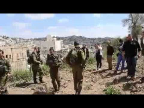 Settlers Attack Palestinian Tree Planting at Qurtuba School, Hebron