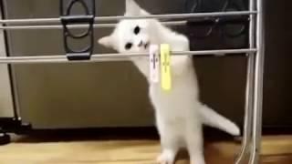 Белый котенок резвится и мурлачет.