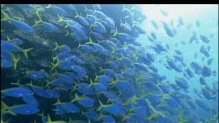 癒しの海 OCEAN BLUE SEA - AUSTRALIA オーストラリア GBR グレートバリアリーフ