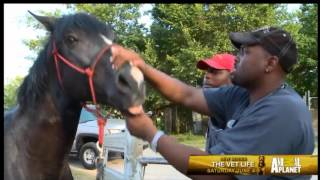 NEW ANIMAL PLANET SERIES FEATURE LOCAL VETS