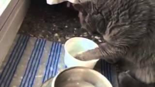 Un gato muy limpio