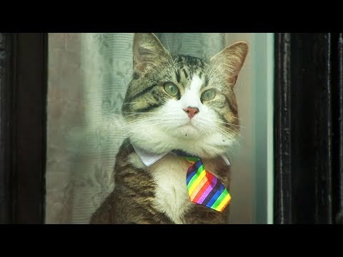 Assange's cat dons rainbow tie as UK judge refuses to halt legal action against WikiLeaks' founder