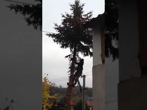 Kácení stromku
