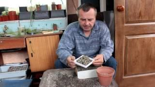 Пикировка, посадка и пересадка кактусов!
