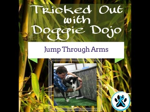 Tricked Out With Doggie Dojo:  Jump Through Arms From The Super Collies