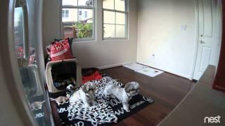 Gus and Gizmo Sense their First Earthquake  August 17, 2015 at 6:49 AM