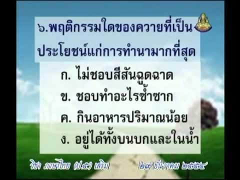0729 P5thb 541229 C ภาษาไทยป 5