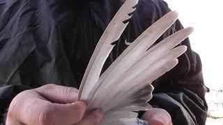 как определить в руках по крылу, хорошо играющего (бьющего) голубя!?