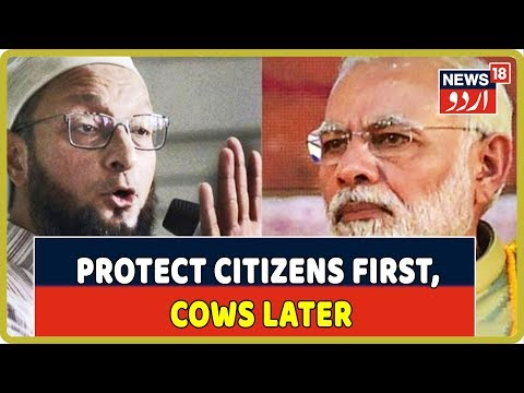 Asaduddin Owaisi Slams PM Modi Over Cow Protection, Says Protect Indian Citizens First