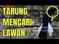 Kacer Mana Yang Gak Bakalan Tarung Dan Emosi Dengar Suara Kacer Gacor Cari Lawan  Mp3 - Mp4 Download