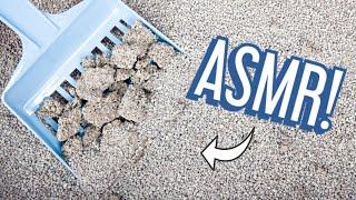ASMR Oddly Satisfying Cat Litter Box Pooper Scooping - Day 2