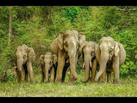 ഒരു ആനപ്രേമിക്ക് പറയാനുള്ളത് | Thrissur Pooram Issue | Save Elephants | Elephant Lovers | ZubiN BoZe