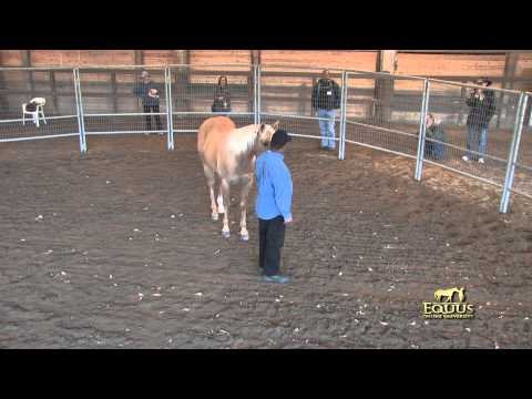 Veterans attend a Monty Roberts Horse Sense and Healing for Stress Disorder