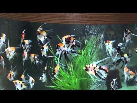 Bob's Tropical Fish Room
