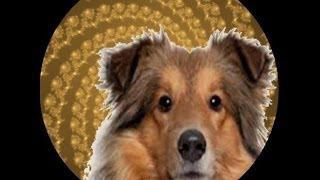 dog transformation parlor hypnosis