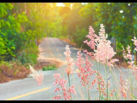 Bless The Broken Road by Selah