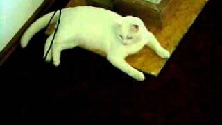 funny cat video part 4