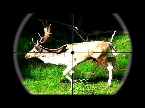 #waikarimoana Hunting Two Fallow Deer In The Roar, Rifle 22-250 & 270 WSM In New Zealand # 230