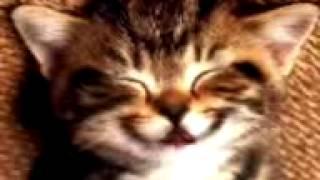 Кошка-будильник