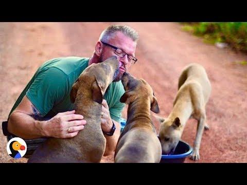 Guy Feeds, Loves Stray Dogs EVERY MORNING | The Dodo