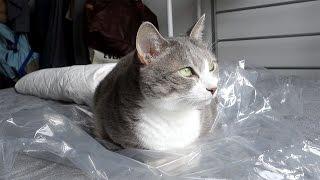 【猫×ビニール】丸めるもよし、上に乗るもよし。個性あふれるビニール遊び
