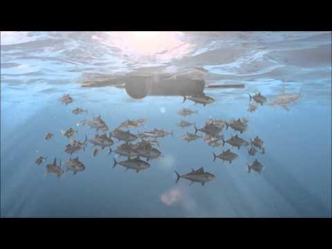 Overfishing Documentary