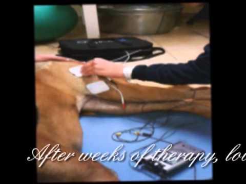 Paralyzed dog walks again - My Darling Savannah