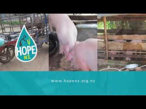 HOPENZ   Pig Farming - Cambodia