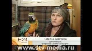 видео Билеты на «Московский цирк Шапито» в парке Арлекино