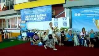 Сепары-террористы из Донецка на выставке собак в Ростове-на-Дону.