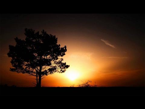 Hosta - True Love Is A Fairy Tale [Free Download]
