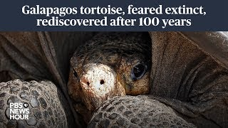 A Galapagos giant tortoise, feared extinct for a century, rediscovered