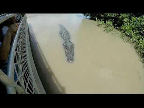 (River Monsters) Buaya terbesar di dunia !!!