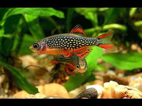 Bể các loại cá cảnh rẻ, rất đẹp, dễ nuôi, được nuôi nhiều nhất