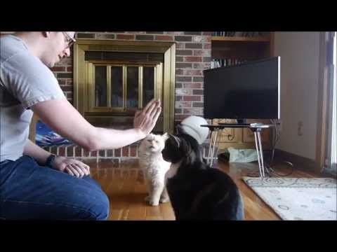 Cats Giving High Fives - Round 2!
