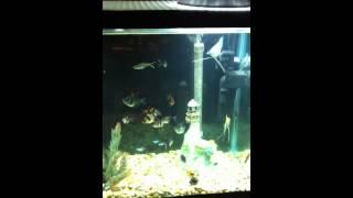 crystal clear aquarium acuario agua transparente